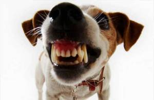 escovar-dentes-cachorro